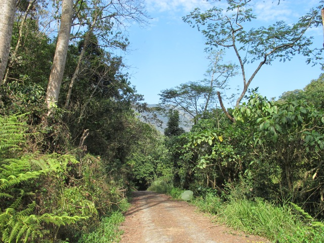 Trail at Tengjhih National Forest, near Kaohsiung in Taiwan, an excellent mid-mountain area where it's possible to catch up with many of Taiwan's endemic bird species.