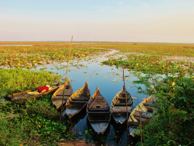 """Marshes near Phnom Krom, about 10km south of Siem Reap. This is an excellent area for a range of marshland birds and wintering """"Sibes""""."""