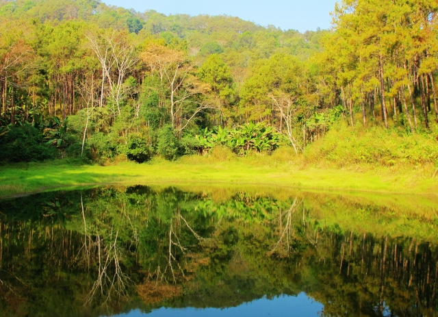 Pond near the DYK substation in the Doi Chiang Dao national park - a regular site for Black-tailed Crake.