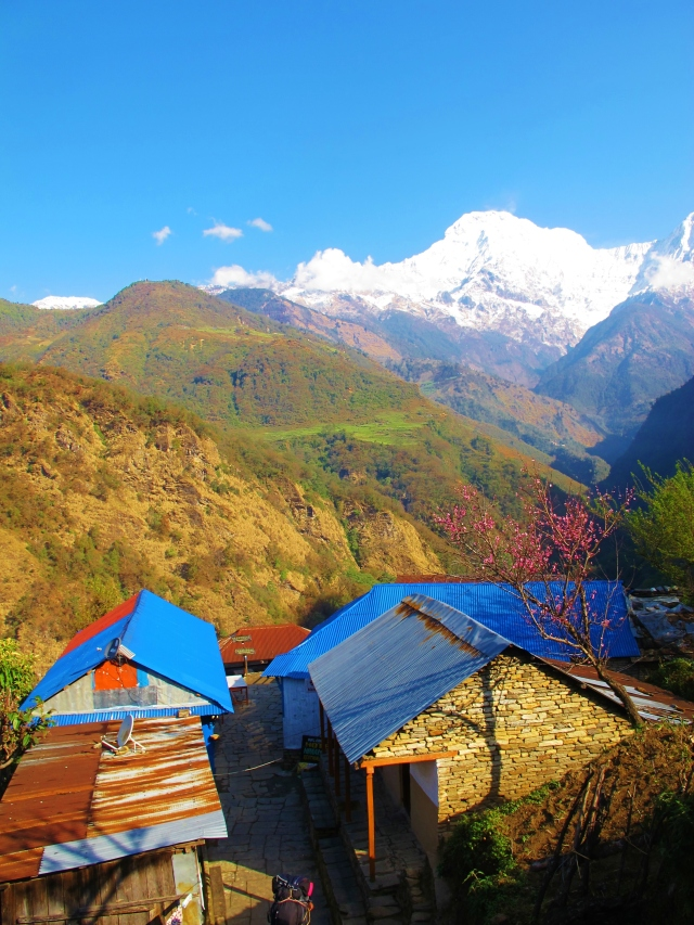 View to the Annapurna range from Landruk, our stop on the first night of the trek. Blue-fronted Redstart was a colorful addition to the trip list in the gardens around here.