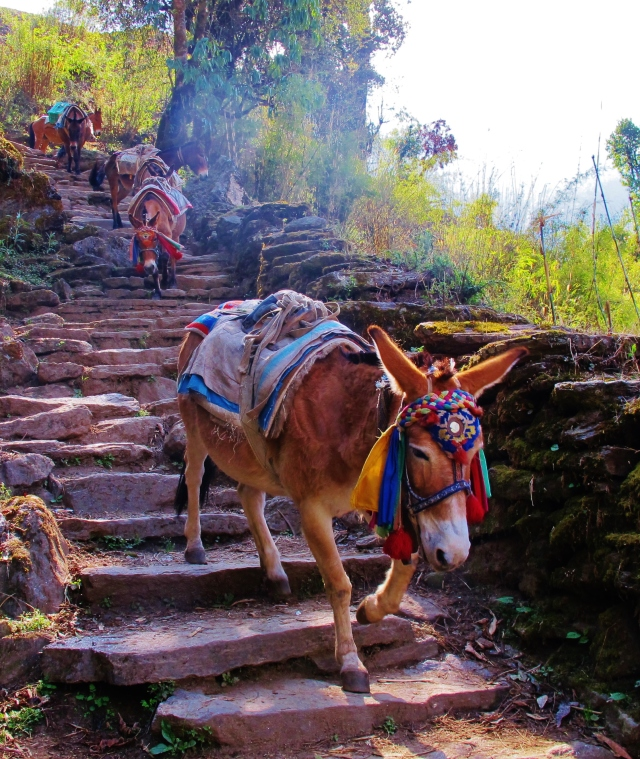 Trails were often busy with trekkers, porters and mules.