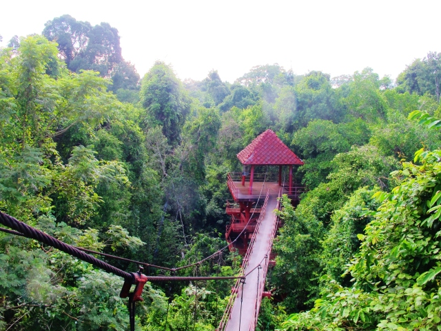 The canopy walkway at Trang botanical gardens.