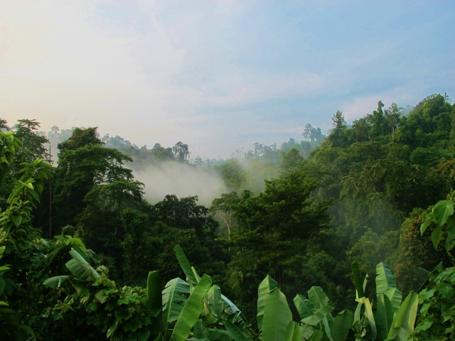 Early morning views across the rainforest canopy at Krung Ching.