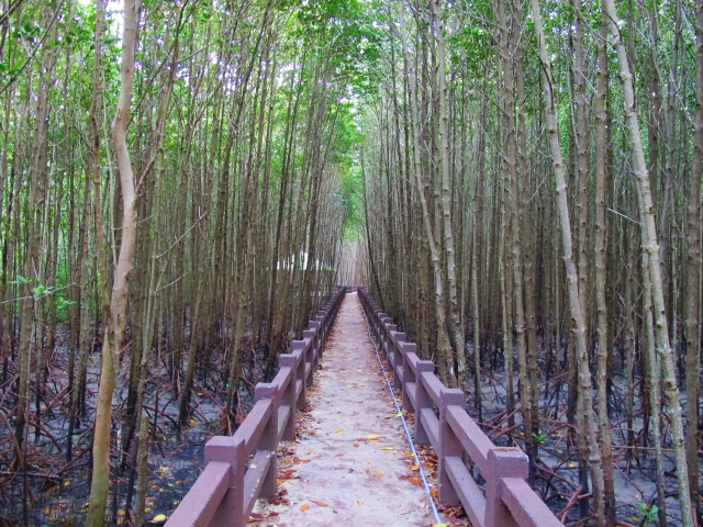 The mangrove boardwalk, next to the Tammalang pier, about 10km south of Satun.