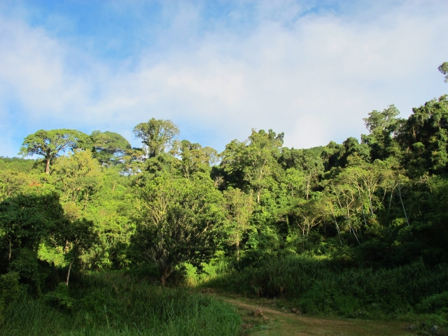 Trees at Ta Nung valley become alive with bird activity in the early morning as soon as the sun hits.