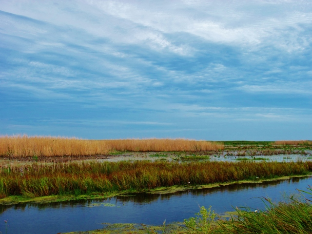 "Marshes at ""Shoveler Pond""."