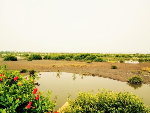 Dapeng Bay