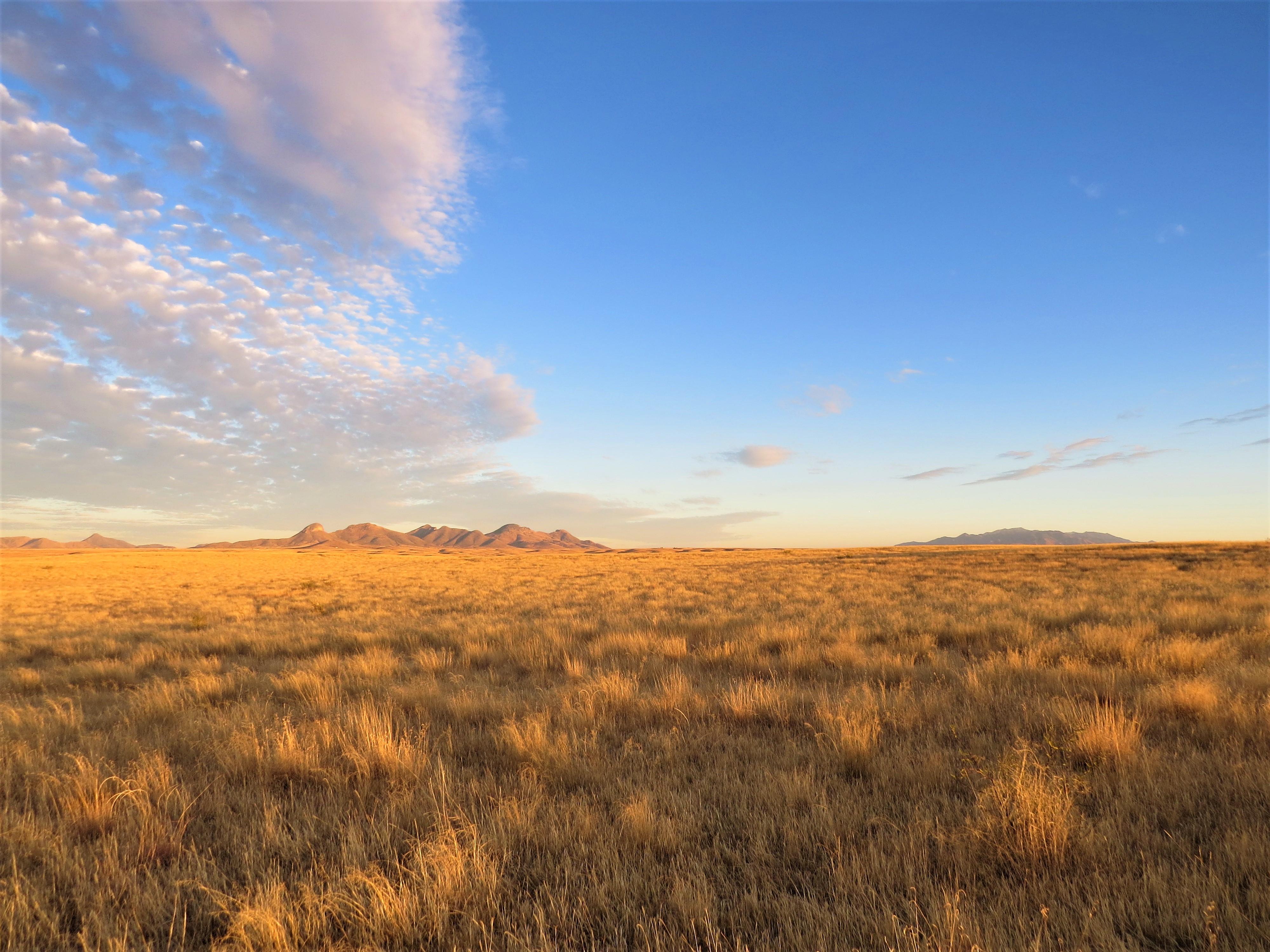 Sonoita Grasslands2